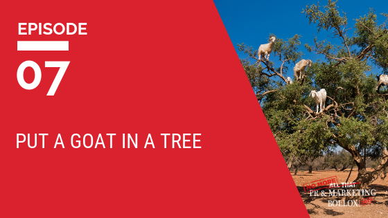 Put a goat in a tree blog image